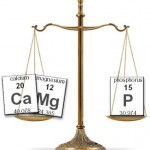 calcium,magnesium and phosphorus
