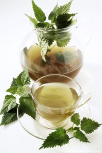White nettle tea